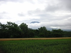 mugibatake.JPG